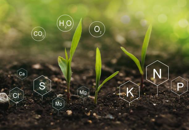 what is nitrogen fertilizer