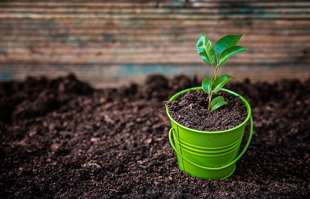 what is soil improver
